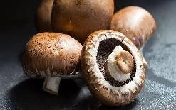 sirjannewsMushroom+is+no+less+than+a+boon+for+health%2C+learn+7+wonderful+benefits