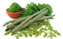 sirjannewsDrumstick+is+a+treasure+of+beauty+along+with+health%2C+these+are+wonderful+benefits